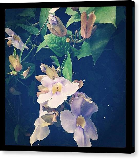 Berlin Canvas Print - Such Beautiful Trees And Plants! #jaco by Berlin Green