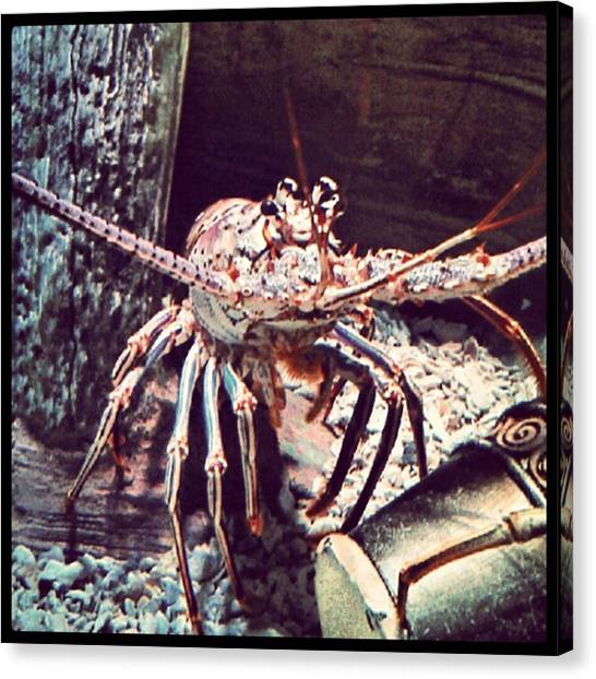 Lobster Canvas Print - Suddenly, I Want Seafood.... #lobster by Kel Hill