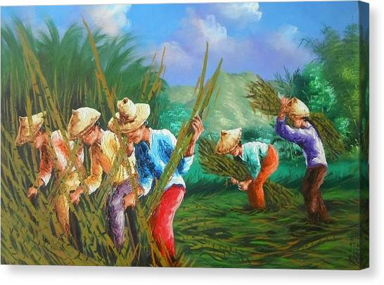 Sugar Cane Harvest Canvas Print by Pretchill Smith