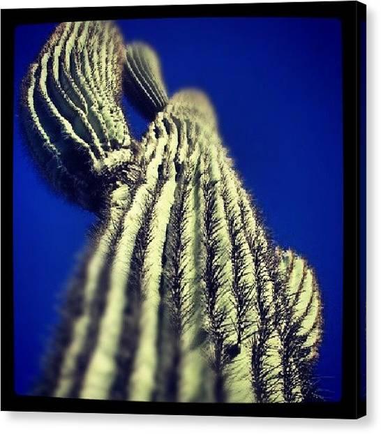 Sonoran Desert Canvas Print - #suguaro #cactus #sonoran #desert by Dave Moore