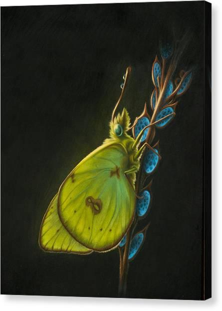 Sulpher Canvas Print