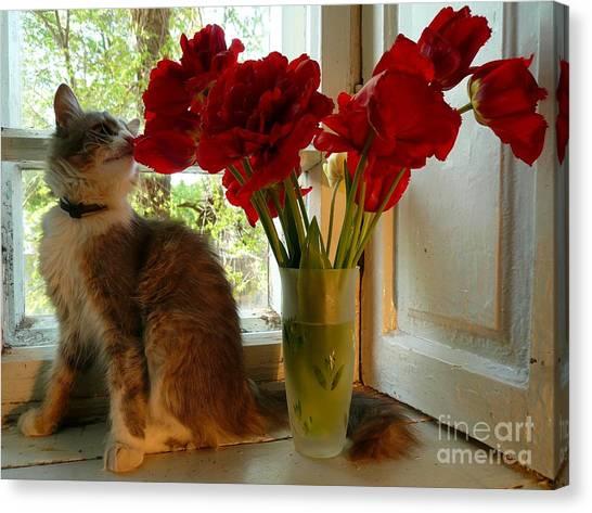 Summer - Cat 1 Canvas Print by Alisa Tek
