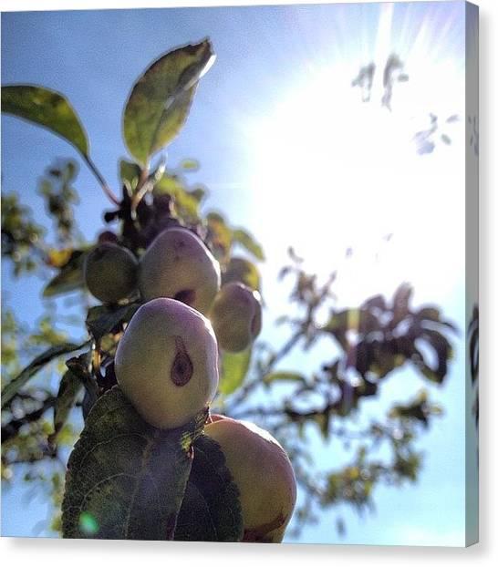 Fruit Trees Canvas Print - Summer Apples by Rillaith