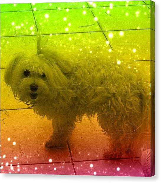 Athens Canvas Print - Summer Candy 💗🐶💗 #dog #dogs by Myrtali Petrocheilou