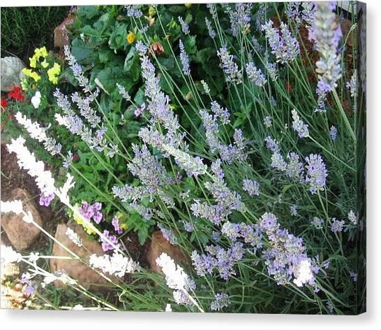 Summer Lavender Canvas Print
