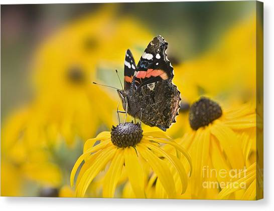 Summer Stunner Canvas Print by Jacky Parker