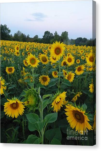 Summers Glory Canvas Print