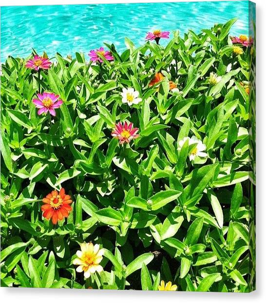 Swimming Canvas Print - Sun Baked Flowers. And This Ground Is by John Schultz