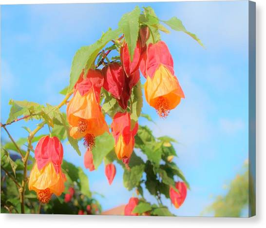 Sun Drenched Bell Flower Canvas Print