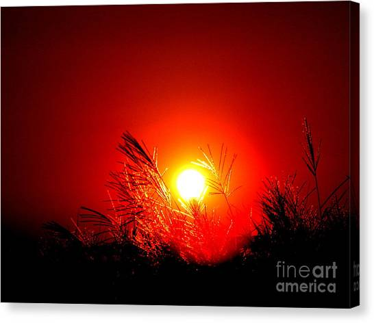 Sun Drop Canvas Print by Laurence Oliver