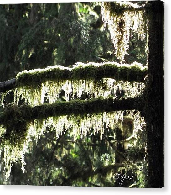 Rainforests Canvas Print - Sun In The Rainforest 3of5 Sept 4 by Cynthia Post