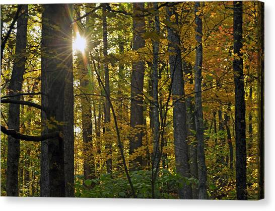 Sun In Trees Canvas Print by Helen Haw