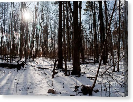 Sun On The Wild Turkey Trail Canvas Print by Gary Chapple