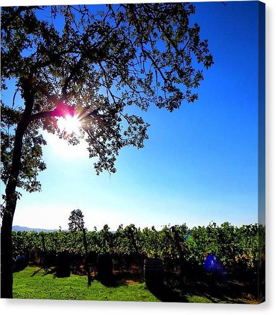 Winery Canvas Print - #sun Over #cooper #mountain #vineyards by Andy Ehlen