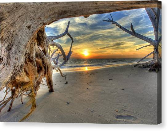 Sun Setting Under The Tree Canvas Print