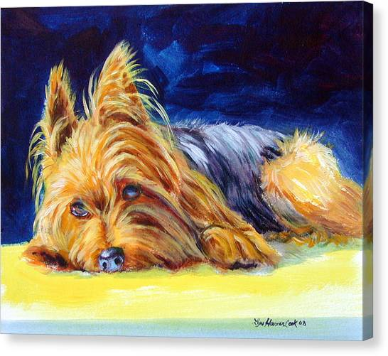 Yorkie Canvas Print - Sun Spot Yorkshire Terrier by Lyn Cook