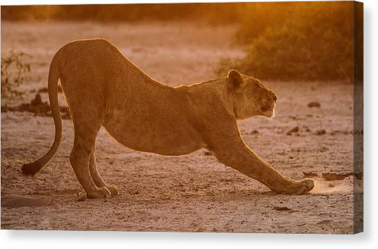 Sun Stretch Canvas Print