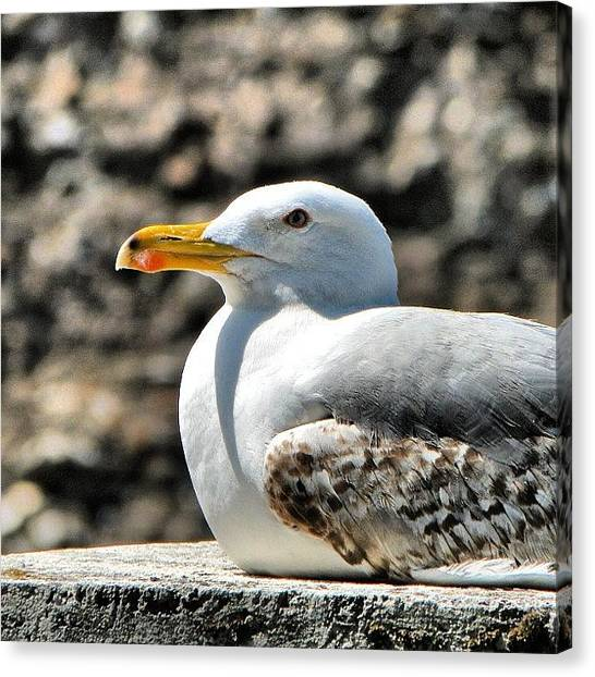 Still Life Canvas Print - Sunbathing Gull by Chi ha paura del buio NextSolarStorm Project