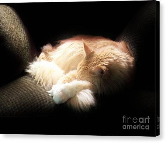 Sunbeam Dreams Canvas Print by Judy Via-Wolff