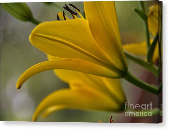 Sundrenched Canvas Print by Tamera James