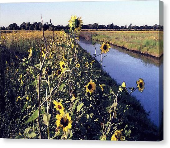 Sunflower Canal Canvas Print by Eunice Olson