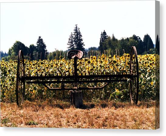 Sunflower Farm Scene Canvas Print