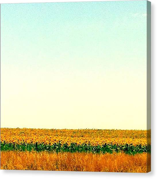 Argentinian Canvas Print - Sunflower Fields #photooftheday by Martin Endara