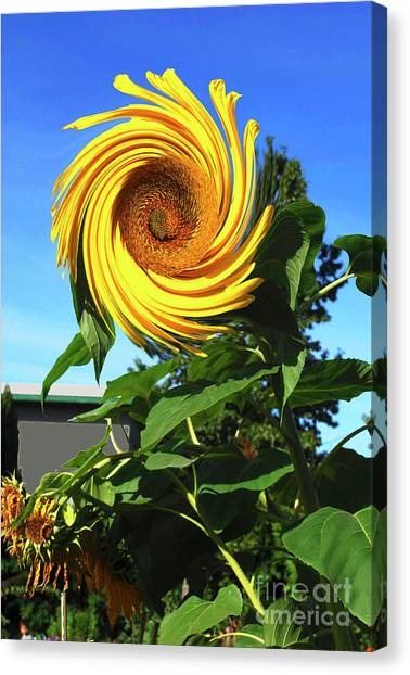 Sunflower Twirl Canvas Print