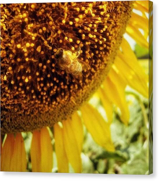 Sunflowers Canvas Print - #sunflowers #bee #instahub by Taras Paholiuk