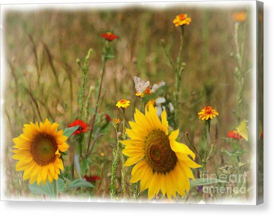 Sunflowers In  The  Wild  Canvas Print