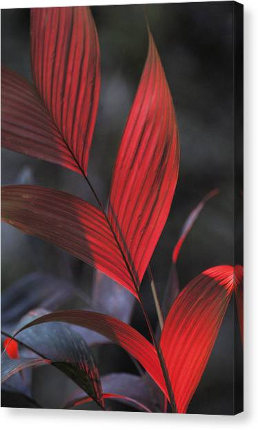 Amazon River Canvas Print - Sunlight Illuminates The Red Leaves by Michael Nichols