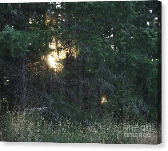 Sunlight Orbs 3 Canvas Print by Jane Whyte