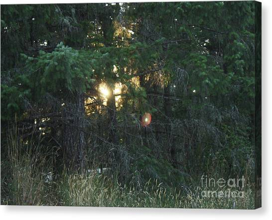 Sunlight Orbs Canvas Print by Jane Whyte