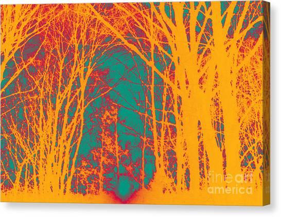 Sunlit Forest Canvas Print