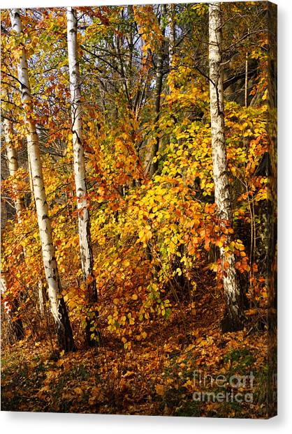 Colorplay Canvas Print - Sunny Fall Day by Lutz Baar