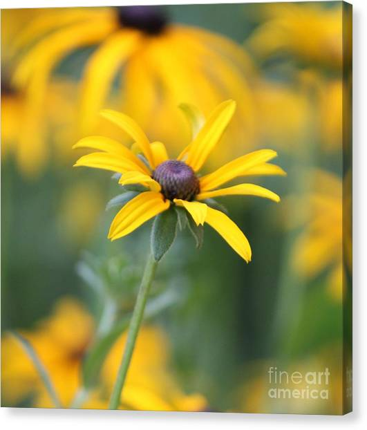 Sunny Flower - 2 Canvas Print by Marilyn West