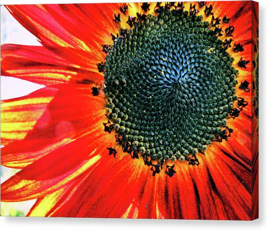 Sunny One Canvas Print