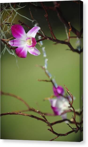 Sunny Orchid Canvas Print by Brandon McNabb