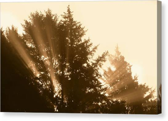 Sunrise In Sepia Canvas Print