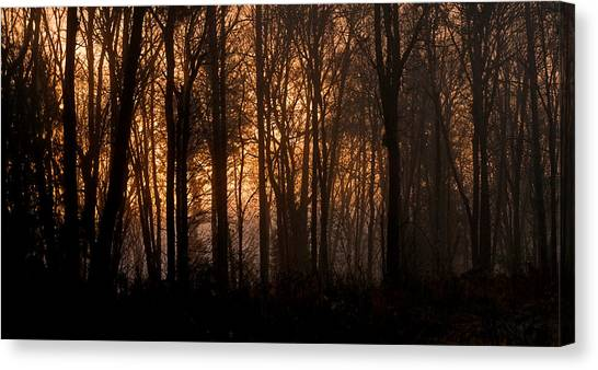 Sunrise Through Trees Canvas Print by Shawn Zimmerman