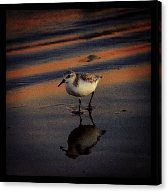 Beach Sunsets Canvas Print - Sunset And Bird Reflection by James Granberry