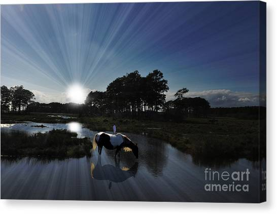 Sunset Assateague Island With Wild Horse Canvas Print