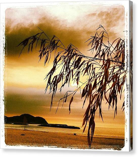 Bamboo Canvas Print - Sunset At Shingu Beach by Aldo Bloise