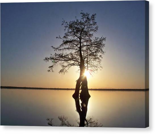 Great Dismal Canvas Print - Sunset Behind A Tree by Tanya Moody