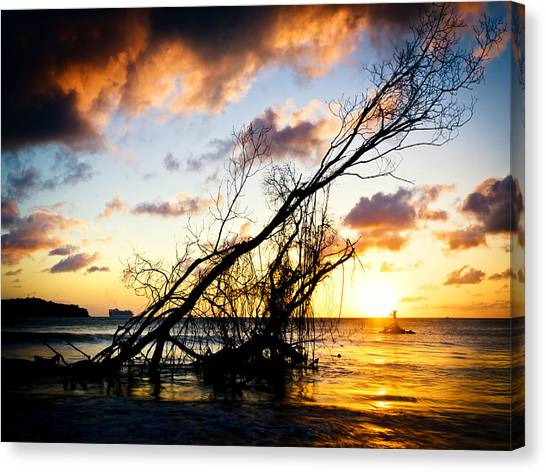 Sunset Drift Wood 2 Canvas Print