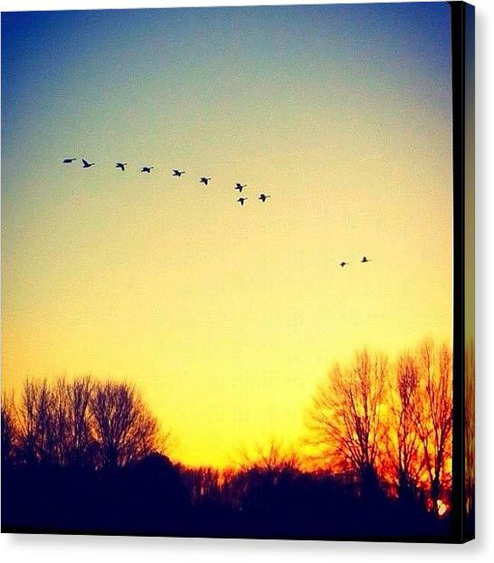 Arkansas Canvas Print - Sunset Fly By by Roger Snook
