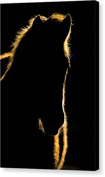 Brown Ranch Trail Canvas Print - Sunset Horse Silhouette Canada by Mark Duffy