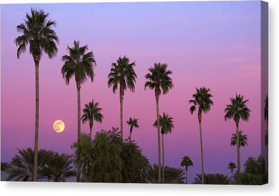 Palm Trees Sunsets Canvas Print - Sunset Moon by Dave Dilli
