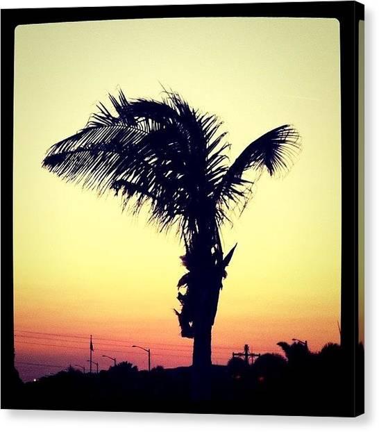 Palm Trees Canvas Print - Sunset by Tony Yu