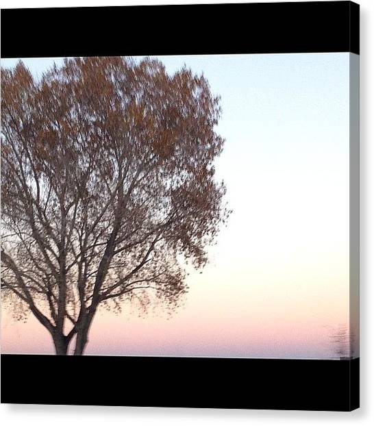 Wolves Canvas Print - #sunset #tree #fall #iphone4s by Wolf Stumpf